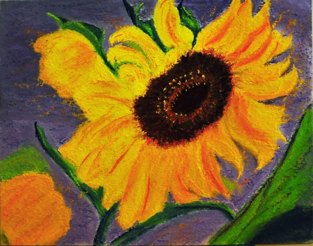 Sunflower - Soft Pastel