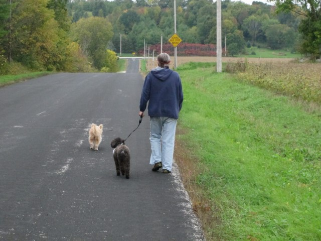 Sandy takes Spiky for a last walk along the road with Honey leading the way.